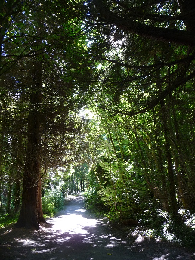 The Woods at Coole