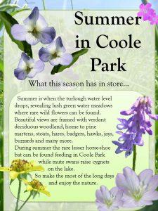 Coole Park Summer Promotional Poster