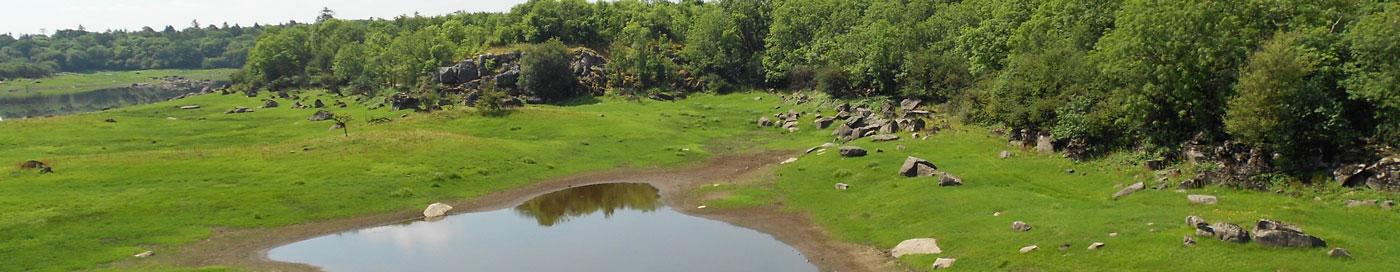 Coole Park Nature Reserve